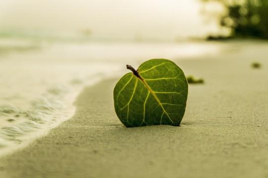 Coastal Walk and Meditation