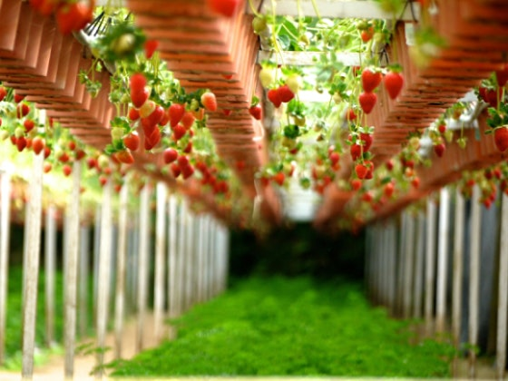 The Buddha in the Garden: Growing our own food